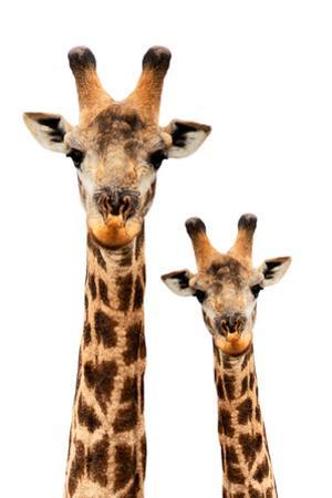 Safari Profile Collection - Portrait of Giraffe and Baby White Edition III