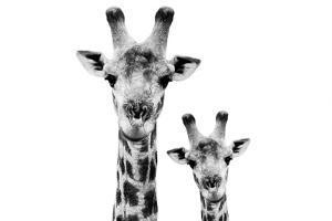 Safari Profile Collection - Portrait of Giraffe and Baby White Edition VI by Philippe Hugonnard