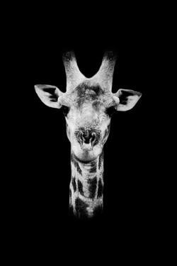 Safari Profile Collection - Portrait of Giraffe Black Edition II by Philippe Hugonnard