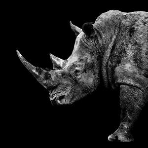 Safari Profile Collection - Rhino Black Edition II by Philippe Hugonnard