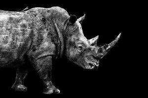 Safari Profile Collection - Rhino Black Edition by Philippe Hugonnard