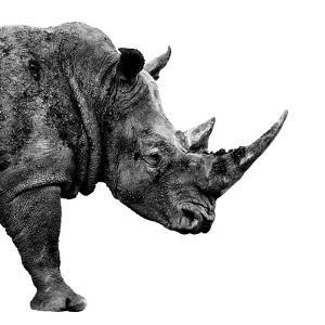 Safari Profile Collection - Rhino White Edition II by Philippe Hugonnard