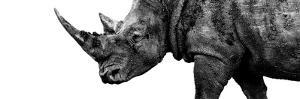 Safari Profile Collection - Rhino White Edition III by Philippe Hugonnard