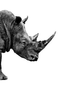 Safari Profile Collection - Rhino White Edition IV by Philippe Hugonnard