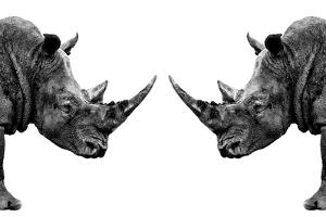 Safari Profile Collection - Rhinos Face to Face White Edition by Philippe Hugonnard