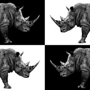 Safari Profile Collection - Rhinos II by Philippe Hugonnard