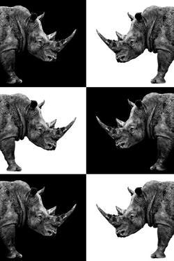 Safari Profile Collection - Rhinos by Philippe Hugonnard