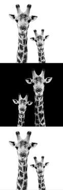 Safari Profile Collection - Two Giraffes IV by Philippe Hugonnard