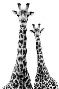 Safari Profile Collection - Two Giraffes White Edition II by Philippe Hugonnard