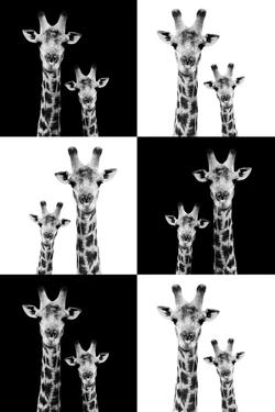 Safari Profile Collection - Two Giraffes by Philippe Hugonnard