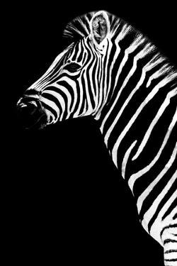 Safari Profile Collection - Zebra Black Edition III by Philippe Hugonnard
