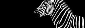 Safari Profile Collection - Zebra Black Edition IV by Philippe Hugonnard