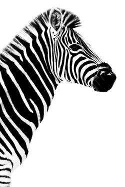 Safari Profile Collection - Zebra White Edition III by Philippe Hugonnard
