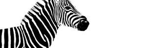 Safari Profile Collection - Zebra White Edition IV by Philippe Hugonnard