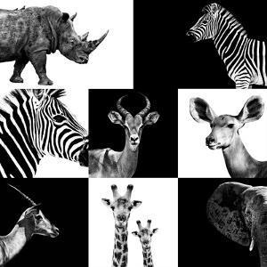 Safari Profile Collection by Philippe Hugonnard