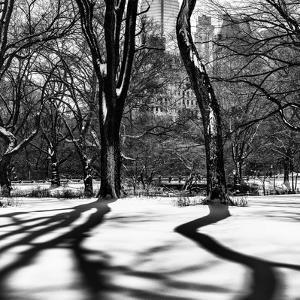 Shadows of Trees Play in Central Park Snow by Philippe Hugonnard