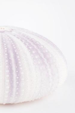 So Pure Collection - Natural Mauve Sea Urchin Shell II by Philippe Hugonnard
