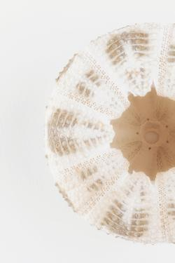 So Pure Collection - Natural Sea Urchin Shell II by Philippe Hugonnard