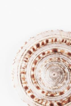 So Pure Collection - Natural Swirl Sundial Sea Shell by Philippe Hugonnard