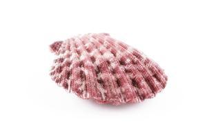 So Pure Collection - Pink Pecten by Philippe Hugonnard