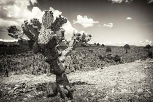¡Viva Mexico! B&W Collection - Cactus in the Mexican Desert III by Philippe Hugonnard