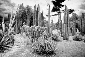 ¡Viva Mexico! B&W Collection - Cardon Cactus II by Philippe Hugonnard