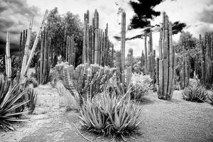 ¡Viva Mexico! B&W Collection - Cardon Cactus II by Philippe Hugonnard