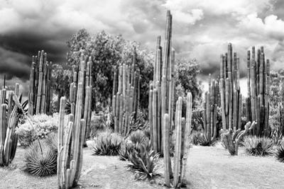 ¡Viva Mexico! B&W Collection - Cardon Cactus by Philippe Hugonnard