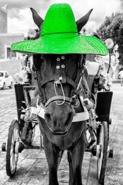 ¡Viva Mexico! B&W Collection - Horse with Green straw Hat by Philippe Hugonnard