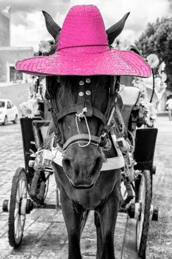¡Viva Mexico! B&W Collection - Horse with Pink straw Hat by Philippe Hugonnard