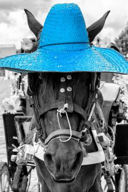 ¡Viva Mexico! B&W Collection - Portrait of Horse with Blue Hat by Philippe Hugonnard