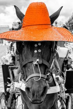 ¡Viva Mexico! B&W Collection - Portrait of Horse with Orange Hat by Philippe Hugonnard