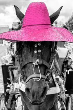 ¡Viva Mexico! B&W Collection - Portrait of Horse with Pink Hat by Philippe Hugonnard