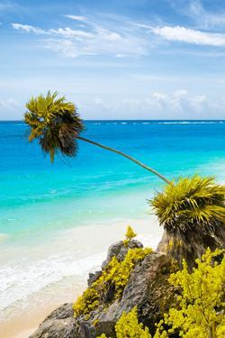 ¡Viva Mexico! Collection - Caribbean Coastline in Tulum IV by Philippe Hugonnard