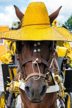 ¡Viva Mexico! Collection - Horse with a straw Hat II - Izamal Yellow City by Philippe Hugonnard