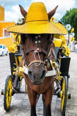 ¡Viva Mexico! Collection - Horse with a straw Hat - Izamal Yellow City by Philippe Hugonnard