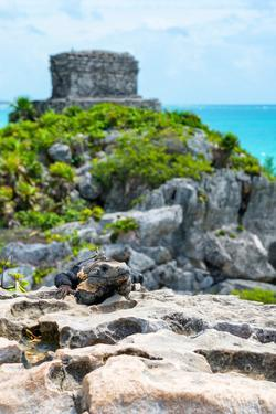 ¡Viva Mexico! Collection - Mayan Archaeological Site with Iguana III - Tulum by Philippe Hugonnard
