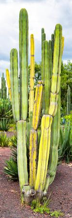 ¡Viva Mexico! Panoramic Collection - Cactus VI by Philippe Hugonnard
