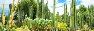 ¡Viva Mexico! Panoramic Collection - Cardon Cactus III by Philippe Hugonnard