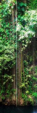 ¡Viva Mexico! Panoramic Collection - Hanging Roots of Ik-Kil Cenote VI by Philippe Hugonnard