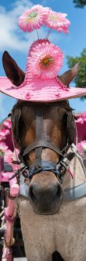 ¡Viva Mexico! Panoramic Collection - Horse with Pink Hat by Philippe Hugonnard