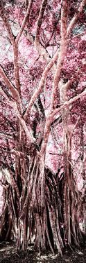 ¡Viva Mexico! Panoramic Collection - Jungle Trees II by Philippe Hugonnard