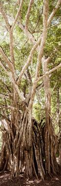 ¡Viva Mexico! Panoramic Collection - Jungle Trees III by Philippe Hugonnard
