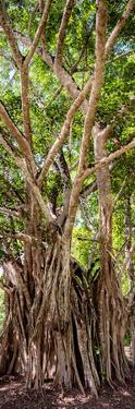 ¡Viva Mexico! Panoramic Collection - Jungle Trees by Philippe Hugonnard