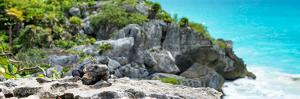 ¡Viva Mexico! Panoramic Collection - Mayan Archaeological Site with Iguana by Philippe Hugonnard