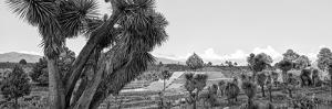 ¡Viva Mexico! Panoramic Collection - Pyramid of Cantona - Puebla IX by Philippe Hugonnard