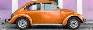¡Viva Mexico! Panoramic Collection - The Orange VW Beetle Car with Thistle Street Wall by Philippe Hugonnard