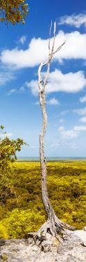 ¡Viva Mexico! Panoramic Collection - View of the Jungle II by Philippe Hugonnard