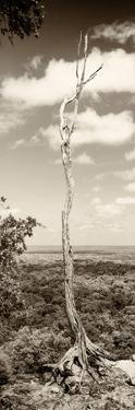 ¡Viva Mexico! Panoramic Collection - View of the Jungle III by Philippe Hugonnard