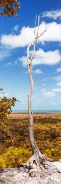 ¡Viva Mexico! Panoramic Collection - View of the Jungle IV by Philippe Hugonnard